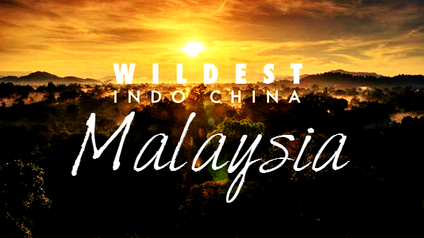 Wildest Indochina Malaysia Cover Photo