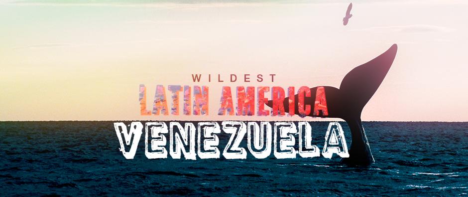 Wildest Latin America - Venezuela Cover Picture