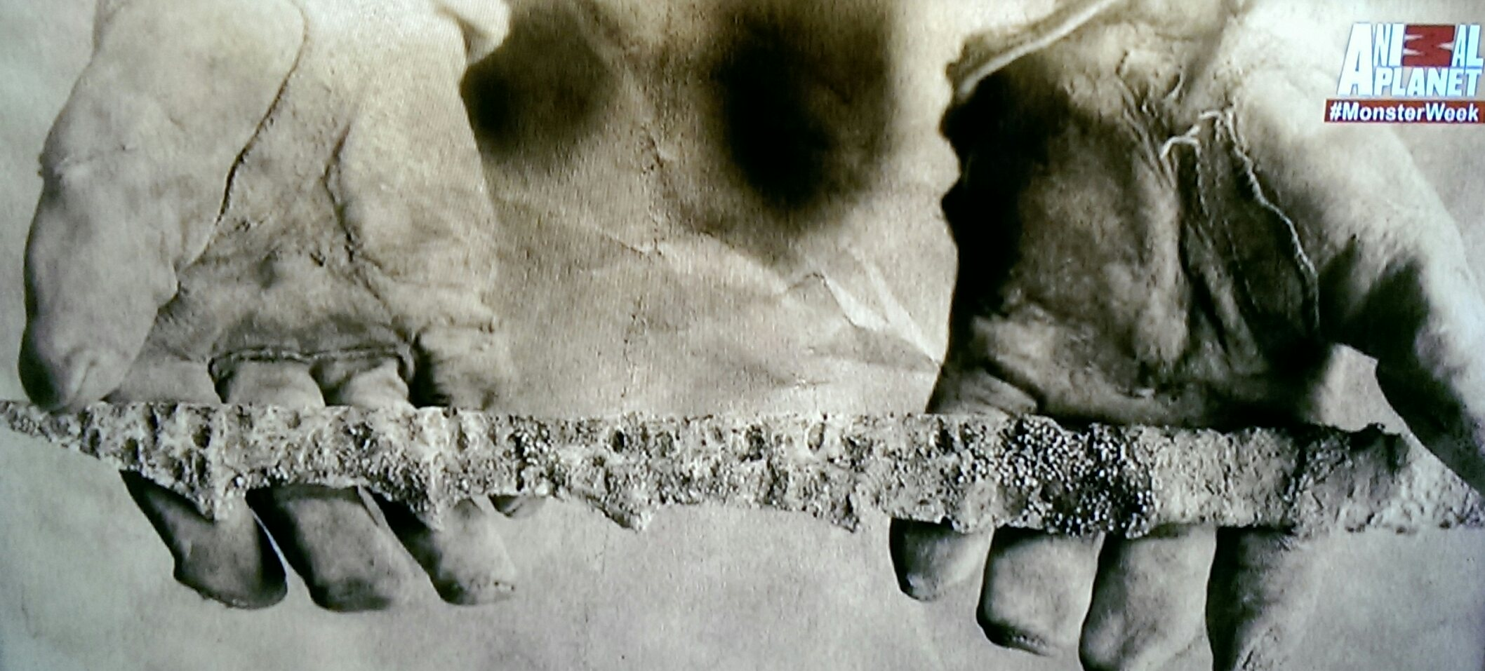 Image of a mermaid spear from the documentary Mermaids: The Body Found