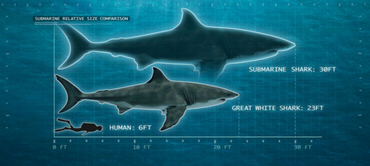 Image of a scale comparing the shark Submarine (30 feet long) to a Great White Shark (23 feet long) to a human (6 feet long).