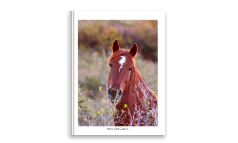 Equine Portraiture – <em>for the horse lover in your life</em>